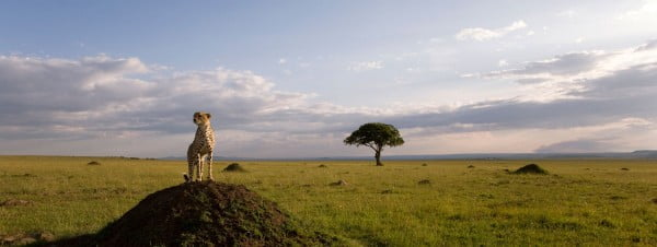A scene from Disneynature's film African Cats