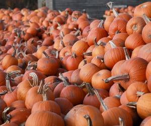 Pumpkins piled high