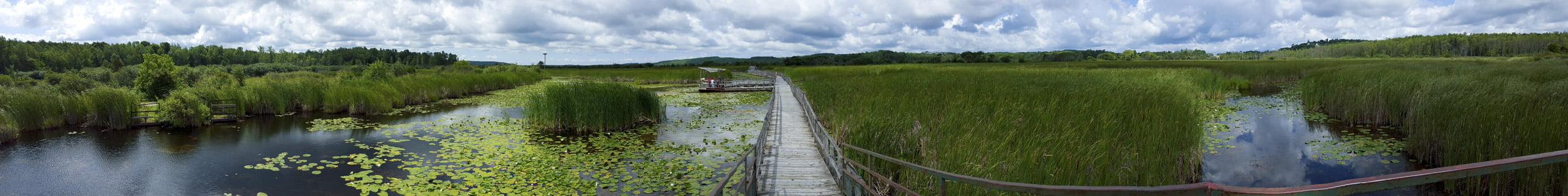 Wye Marsh in Midland