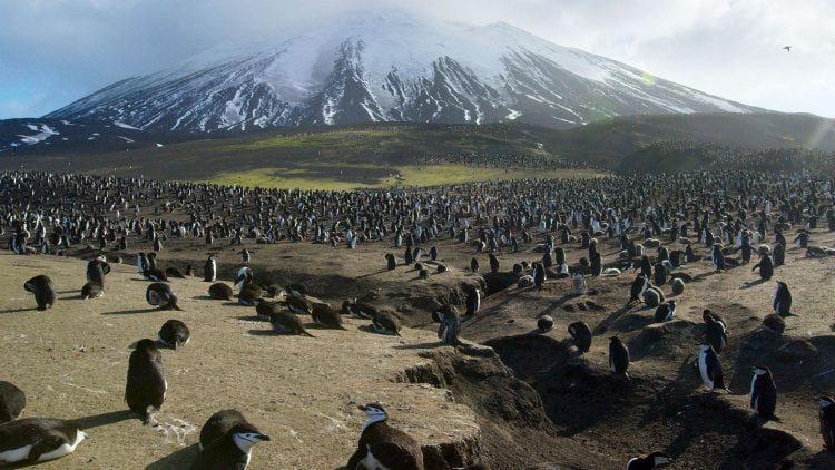 Planet Earth II - Penguins