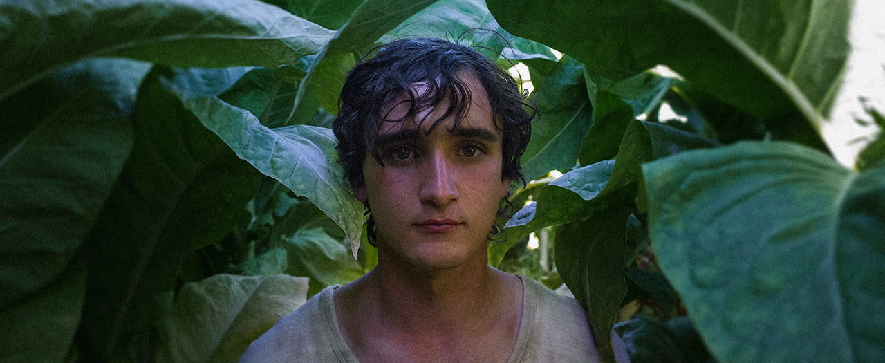 Review: Happy as Lazzaro