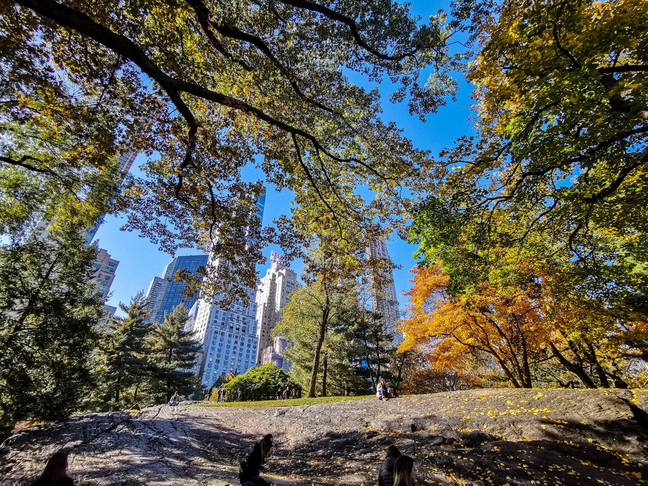 Central Park: New York City