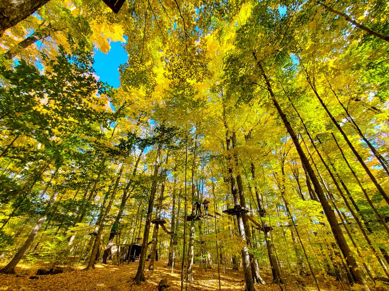 Treetop Trekking in Stouffville
